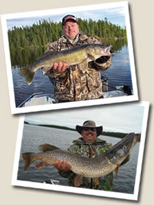 Trophy fish catches at Pickerel Arm Camp Wilderness fishing camps in Ontario, Canada